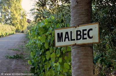 Argentinian Malbec Wine 10 Best Red Wine Brands