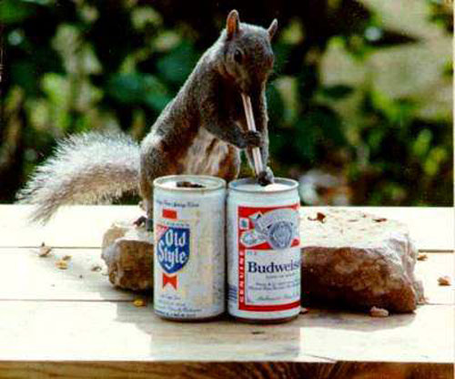 Funny Drunk Animals 10 10 Funniest Drunk Animals of 2011