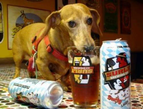 Funny Drunk Animals 2 10 Funniest Drunk Animals of 2011