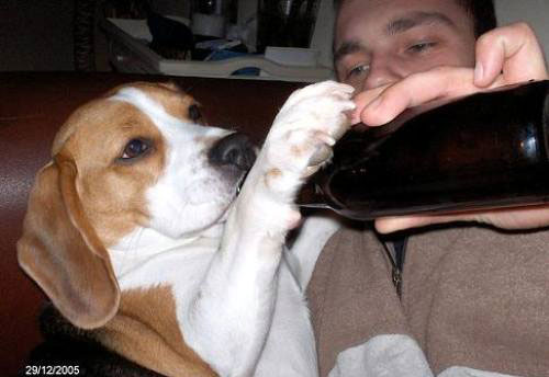 Funny Drunk Animals 5 10 Funniest Drunk Animals of 2011