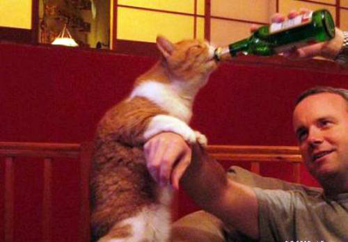 Funny Drunk Animals 6 10 Funniest Drunk Animals of 2011