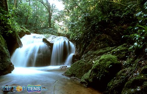 amazon rainforest Top 10 Biggest and Popular Rainforests in The World