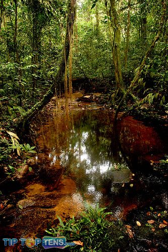 sapo national park Top 10 Biggest and Popular Rainforests in The World