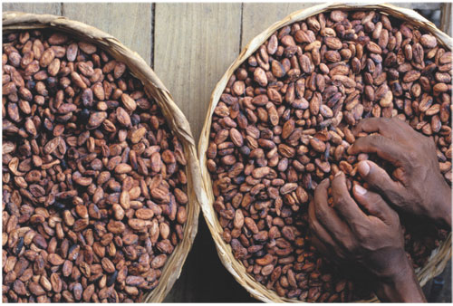 cocoa Top 10 Cocoa Producing Countries