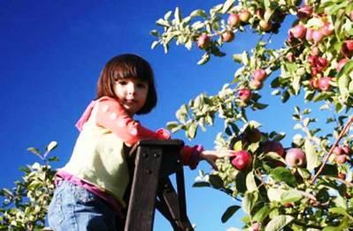 2. Pick apples from the tree Top 10 Things to Do During the Fall Season
