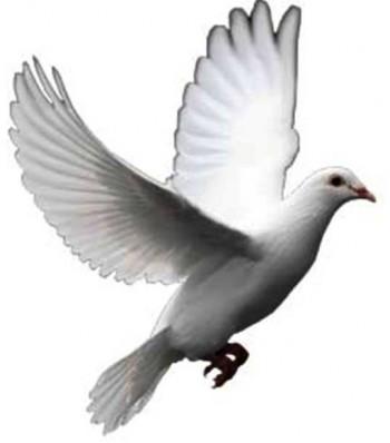 white dove peace symbol