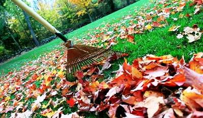 8. Raking leaves Top 10 Things to Do During the Fall Season