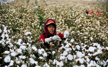 1. People's Republic of China e1322040858616 Top 10 Cotton Producing Countries
