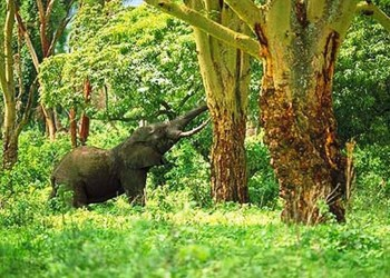 1. The Game Reserves in Tanzania e1320144996165 Top 10 Best Hunting Forest Preserves