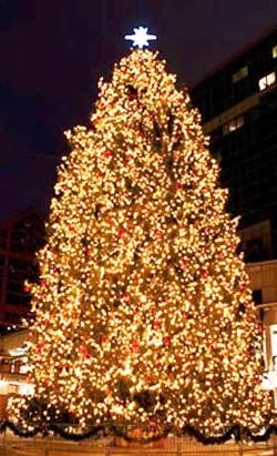 10. Boston Massachusetts Top 10 Largest Christmas Trees in the US