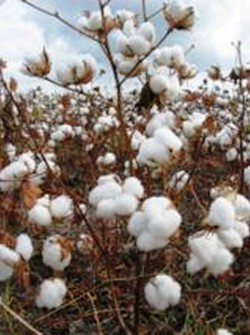 10. Greece e1322040289470 Top 10 Cotton Producing Countries