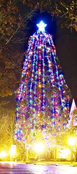 2. Monmouth Oregon Top 10 Largest Christmas Trees in the US