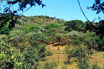 4. Favorite Spot in Namibia e1320144832827 Top 10 Best Hunting Forest Preserves