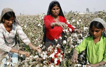 4. Pakistan e1322040702638 Top 10 Cotton Producing Countries