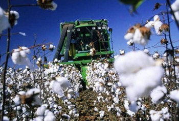 5. Brazil e1322040656326 Top 10 Cotton Producing Countries
