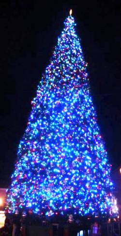 6. Anthem Arizona Top 10 Largest Christmas Trees in the US
