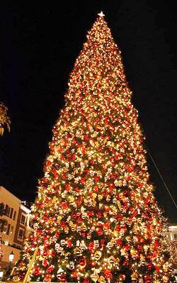 7. Los Angeles California Top 10 Largest Christmas Trees in the US