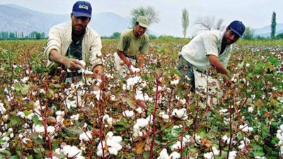 8. Turkey e1322040429507 Top 10 Cotton Producing Countries