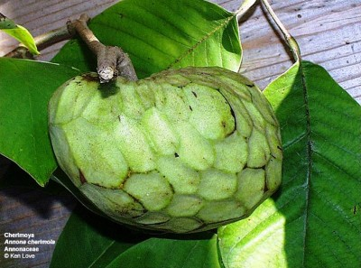 5. Annona Cherimola e1334851640893 10 Lesser Known Fruits and Vegetables