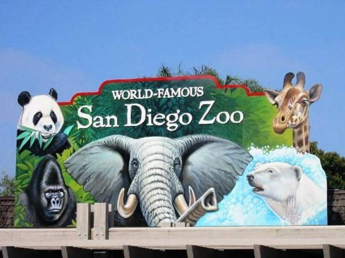 5. The World Famous San Diego Zoo e1334653098721 10 Best Places to Visit During Summer