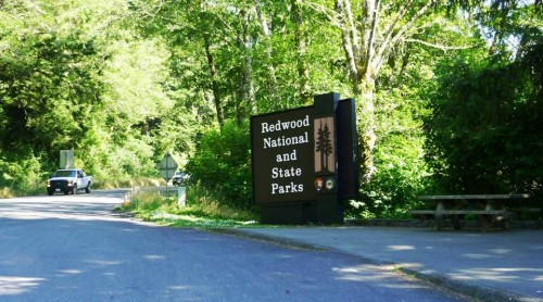 6. Drive to the Redwood National State Parks e1334652974156 10 Best Places to Visit During Summer