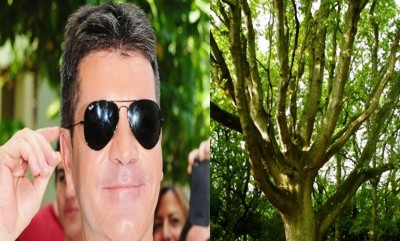 7. Climbing Trees for Simon Cowell e13335451037711 10 Weird Hobbies of the Rich and Famous
