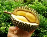 9. Durian