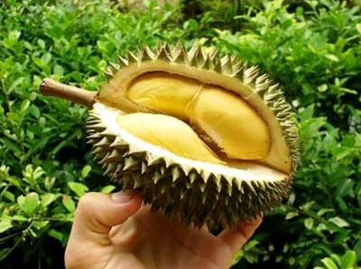 9. Durian e1334851528511 10 Lesser Known Fruits and Vegetables