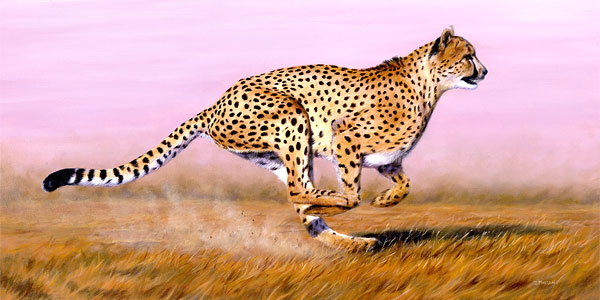 cheetah 10 Things You Might Not Know About Cheetah