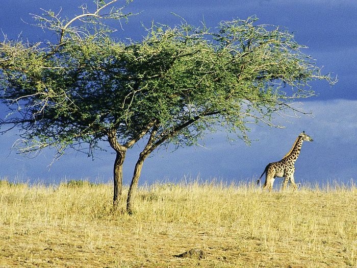 Serengeti Africa 10 Places to See Before You Die