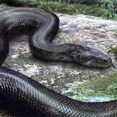 1. Titanoboa – 40 to 50 feet e1341308427105 Top 10 Largest Snakes in the World