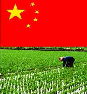 1. China1 e1348141304127 Top 10 Rice Producing Countries in the World