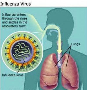 1. What is Flu e1347371923545 10 Most Interesting Facts about Flu