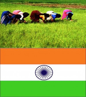 2. India e1348141319718 Top 10 Rice Producing Countries in the World