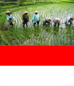 3. Indonesia e1348141464569 Top 10 Rice Producing Countries in the World