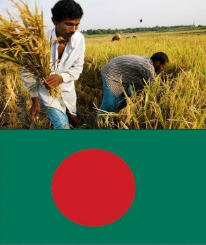 4. Bangladesh e1348141351375 Top 10 Rice Producing Countries in the World