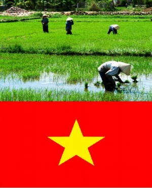5. Vietnam e1348141361728 Top 10 Rice Producing Countries in the World