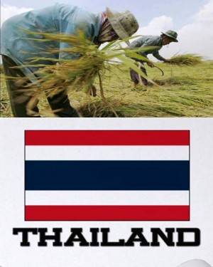 7. Thailand e1348141380662 Top 10 Rice Producing Countries in the World