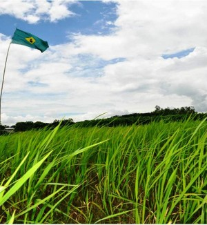 9. Brazil e1348141401463 Top 10 Rice Producing Countries in the World