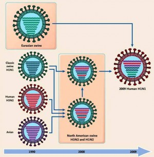 9. Type of Flu Viruses e1347372048670 10 Most Interesting Facts about Flu