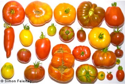 6. Varieties of Tomato e1349840845503 Top 10 Interesting Facts about Tomato