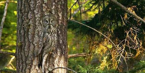 6. Camouflage Owl Top 10 Animals that Perfectly Blend with the Environment
