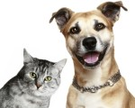 Top 10 Health Benefits of Owning a Pet