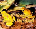 Top 10 Venomous Frogs in the World