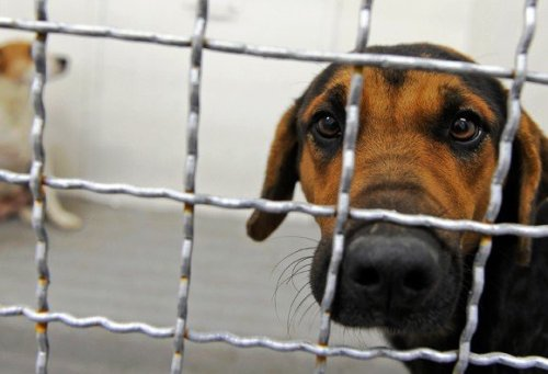 Top 10 Countries Known for Animal Cruelty