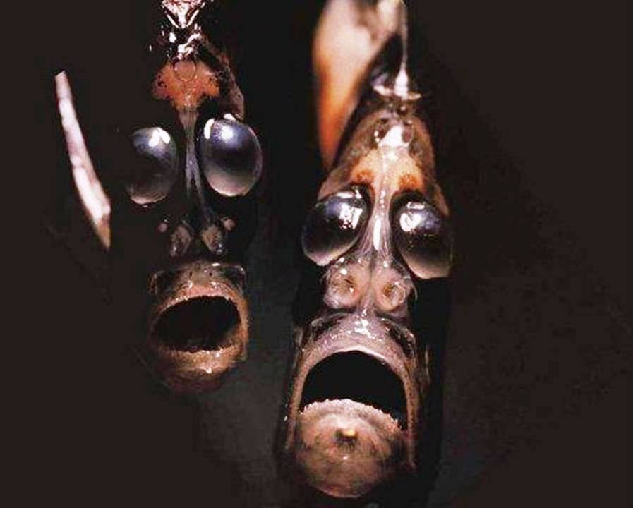 Top 10 Most Bizarre Sea Creatures