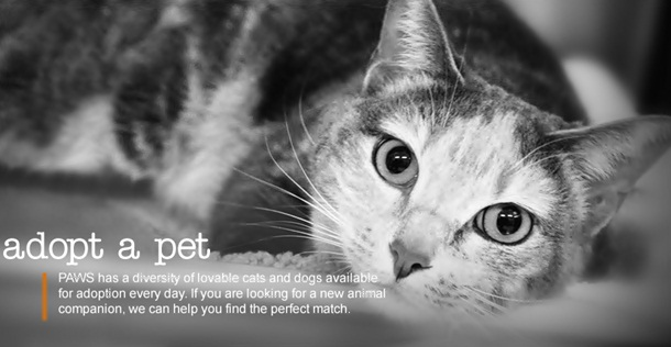 Cat is not just one of the pets at home, but they provide 10 benefits to human that are not just short-term but more of a long term range.