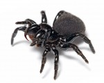 1280px-Mouse_spider