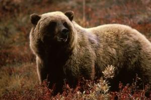 Grizzlybear55