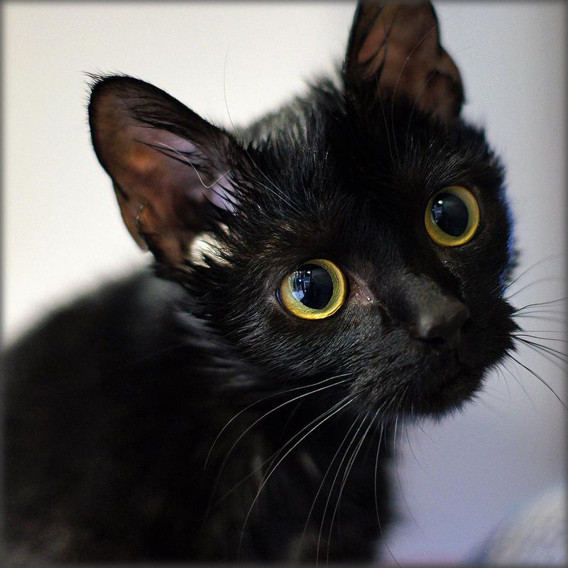 10 Ways Black Cats Show Love